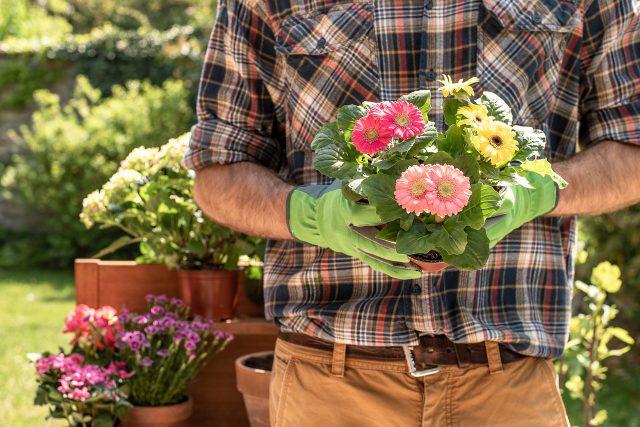 Rośliny w domu – niewymuszone piękno natury